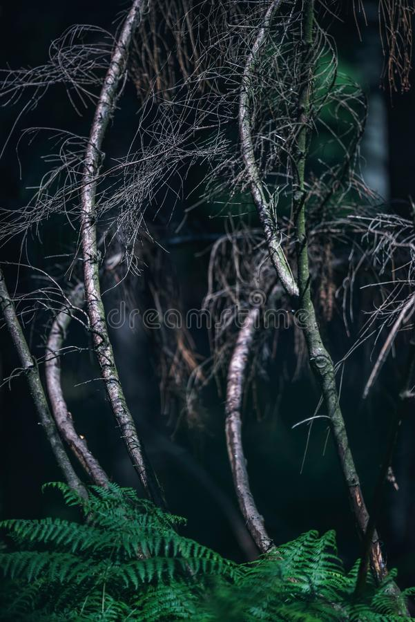 Curved branches in forest with ferns. Close-up of curved branches in forest with ferns stock photo