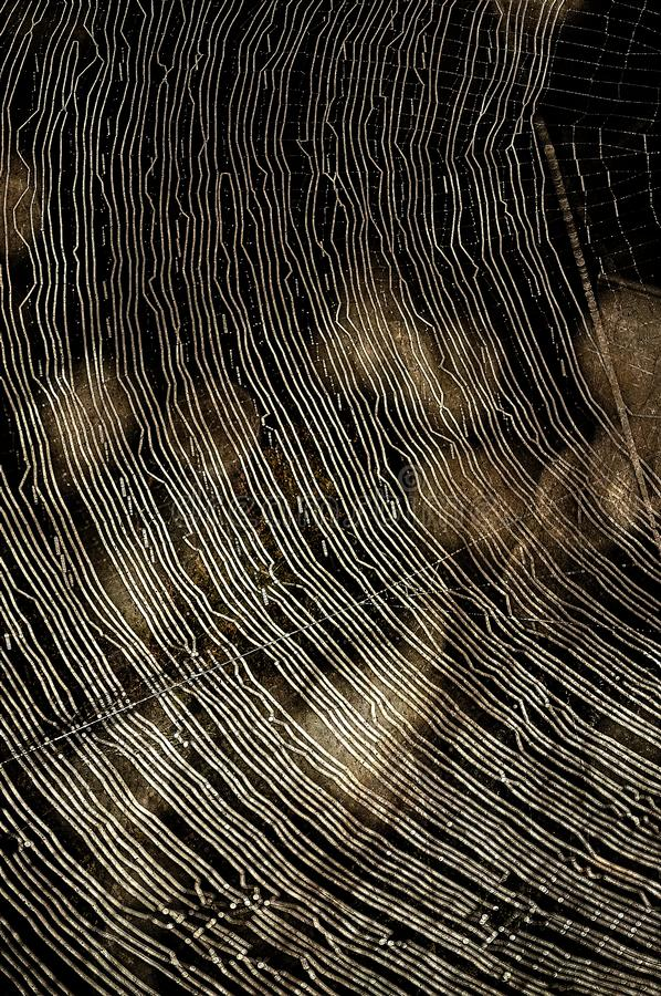 Curved Brightly Lit Spider Web stock photos