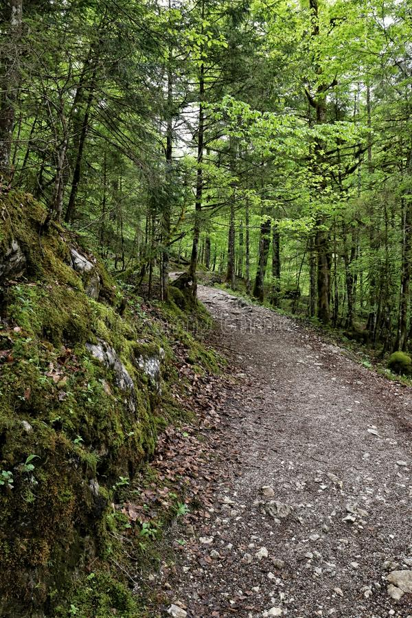 Curved forest gravel road in forest stock photography