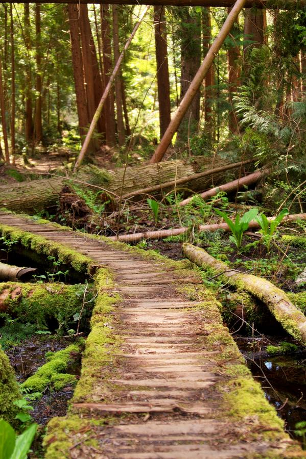 Download Curved Path V1 stock photo. Image of outdoors, outdoor - 13308286