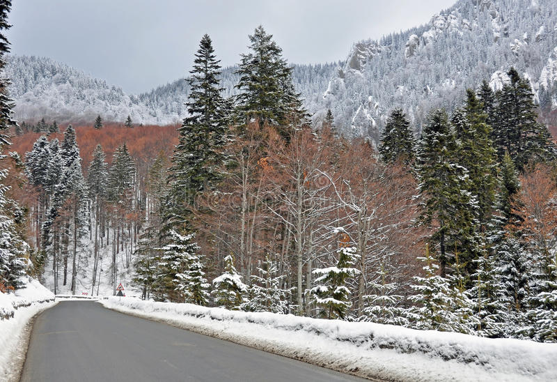Curved road forest royalty free stock photos