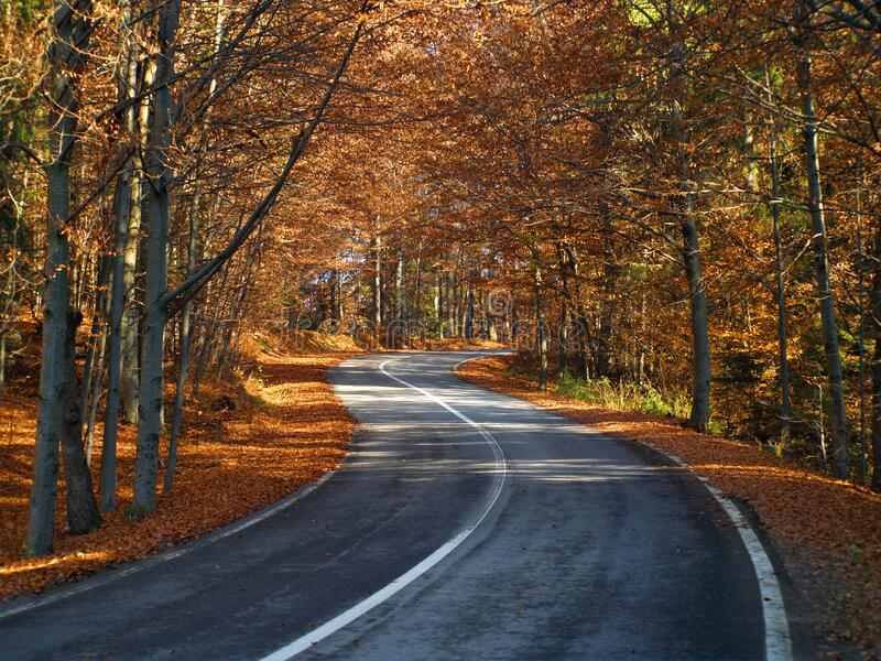 Aerial View Of Forest Road In Beautiful Autumn At Sunset Curved Road In The Mountains With Truck Traffic And Nice Landscape Stock Image Image Of Airborne Asphalt 161945993