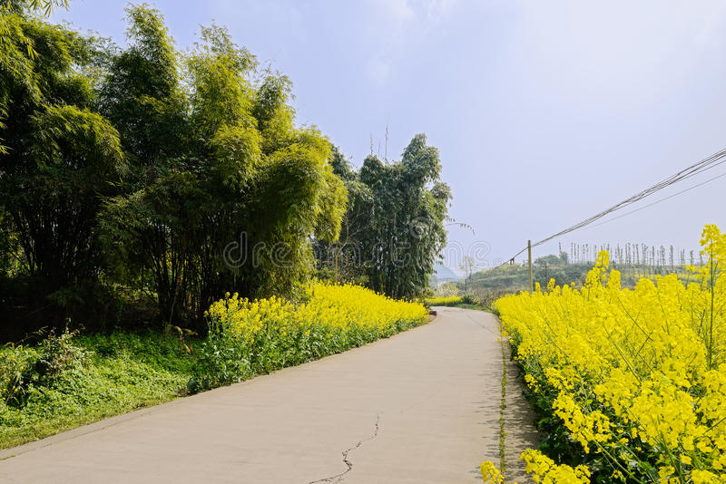 Curving countryroad in flowering fields at spring noon. Chengdu,China royalty free stock images