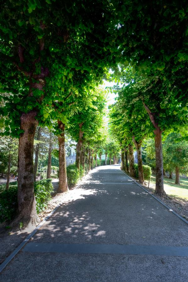 Avenue trees Montepulciano, Tuscany, Italy. Curving line of trees at an avenue in the landscape of Montepulciano in Tuscany, Toscana, Italy, Italia royalty free stock photography
