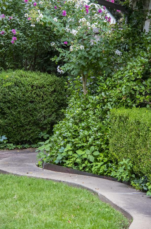 Curving path through hedges and plants and flowering trees stock photo