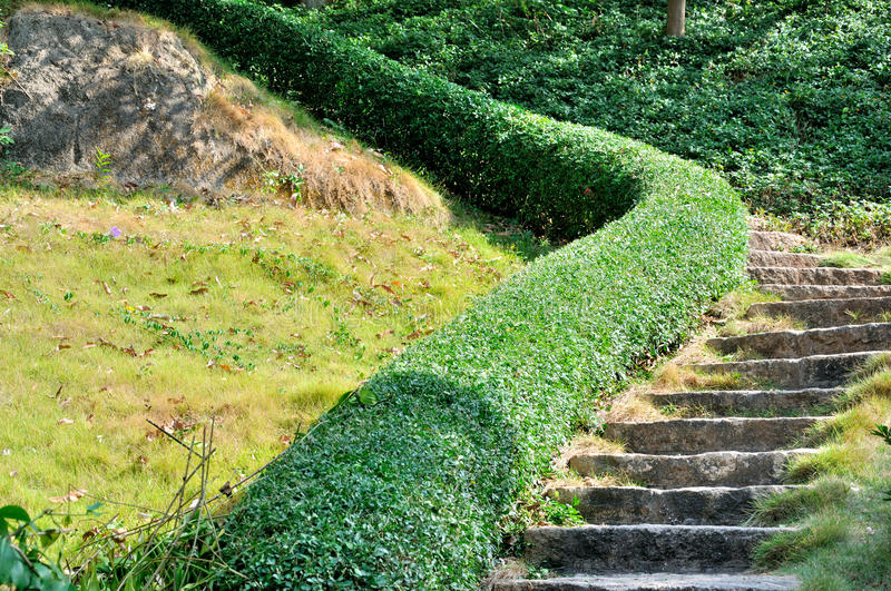 Download Curving stage stock photo. Image of garden, stair, texture - 27384616
