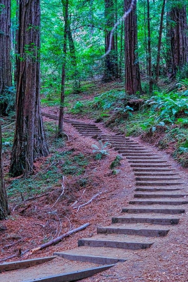 Curving Steps up Redwood Hill stock image