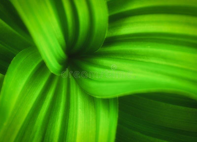 curvy πράσινες γραμμές φύλλων στοκ εικόνες