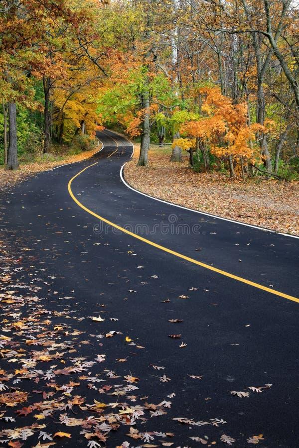 Curvy Blacktop Road