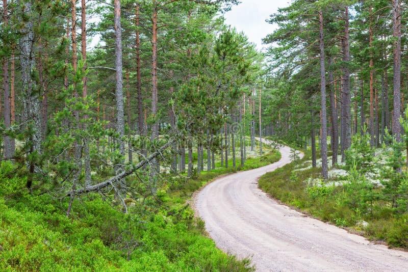 Curvy Schotterstraße durch das Holz stockbild