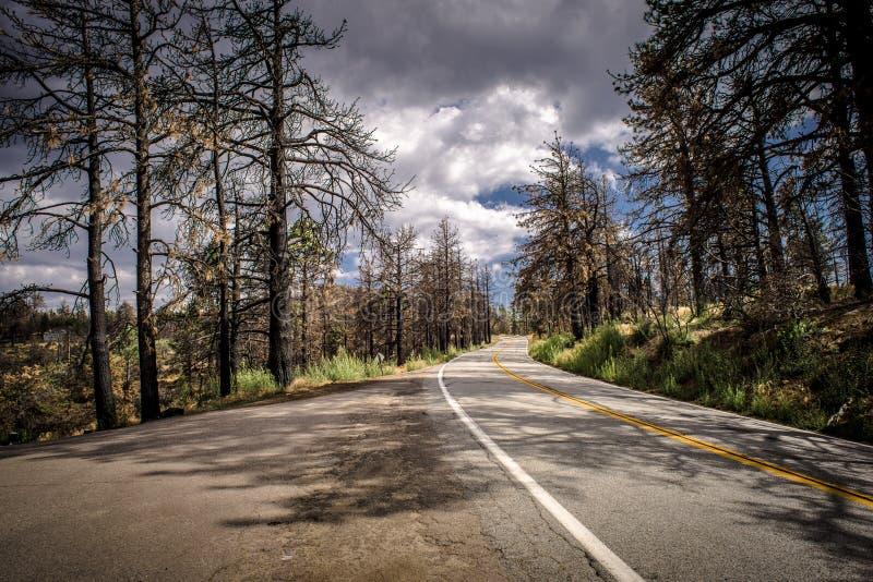Curvy skogväg fotografering för bildbyråer