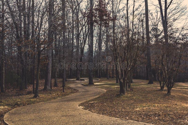 Curvy Weg unter den Bäumen stockbilder
