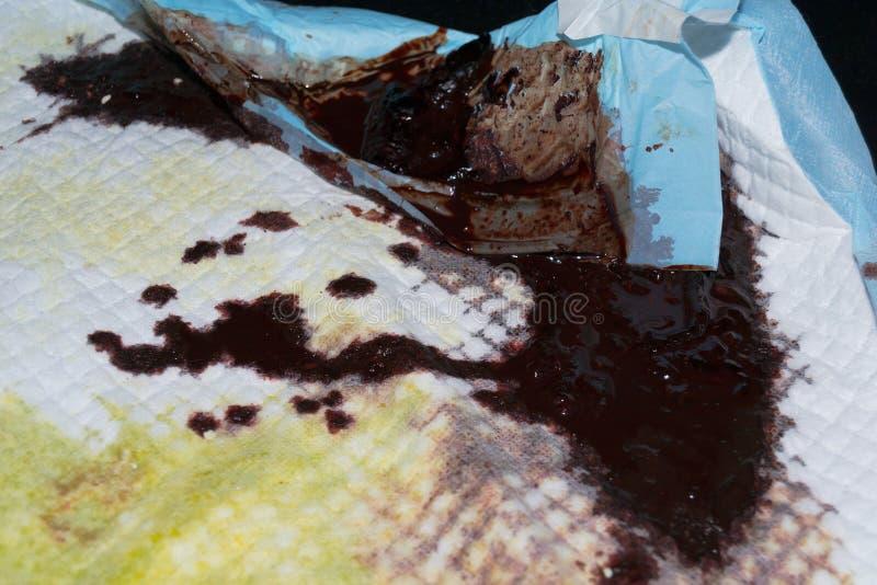 Cuscinetto dell'animale domestico con sangue digerito da un gatto avvelenato con il veleno del roditore, melena immagini stock