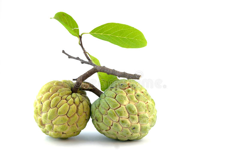 Custard-apple stock image