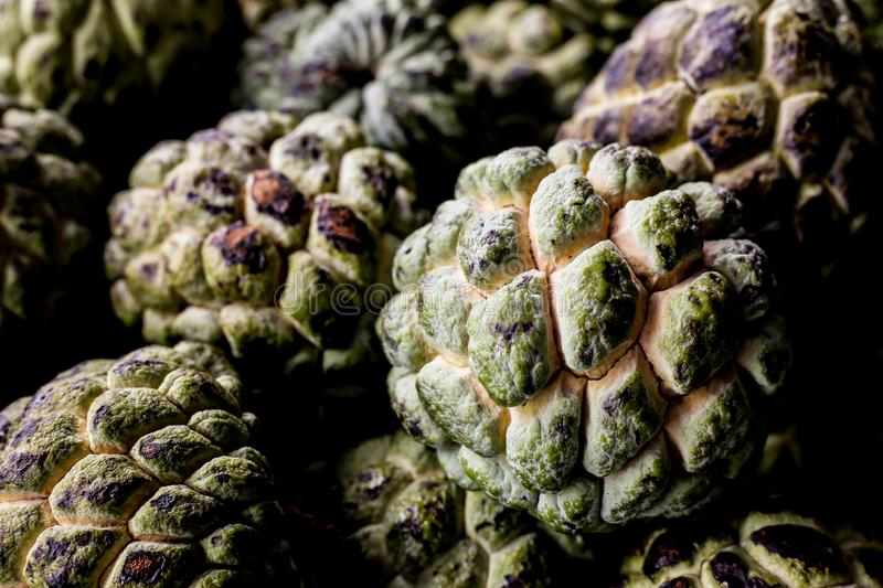 The custard apple. Sugar apple sweetsop, or anon, Annona squamosa , The exotic fruits from Brazil eat popular hard dessert skin plant local tropical shape royalty free stock photography