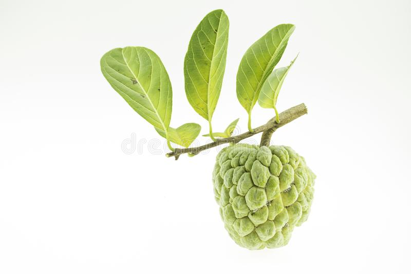 Custard apple. Isolated on a white background stock photography