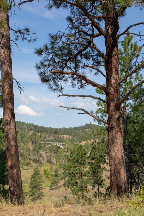 Custer国家公园风景  免版税库存照片