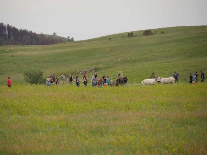 Custer State Park, le Dakota du Sud photo stock