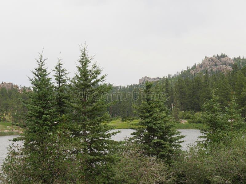 Custer State Park, Zuid-Dakota stock foto