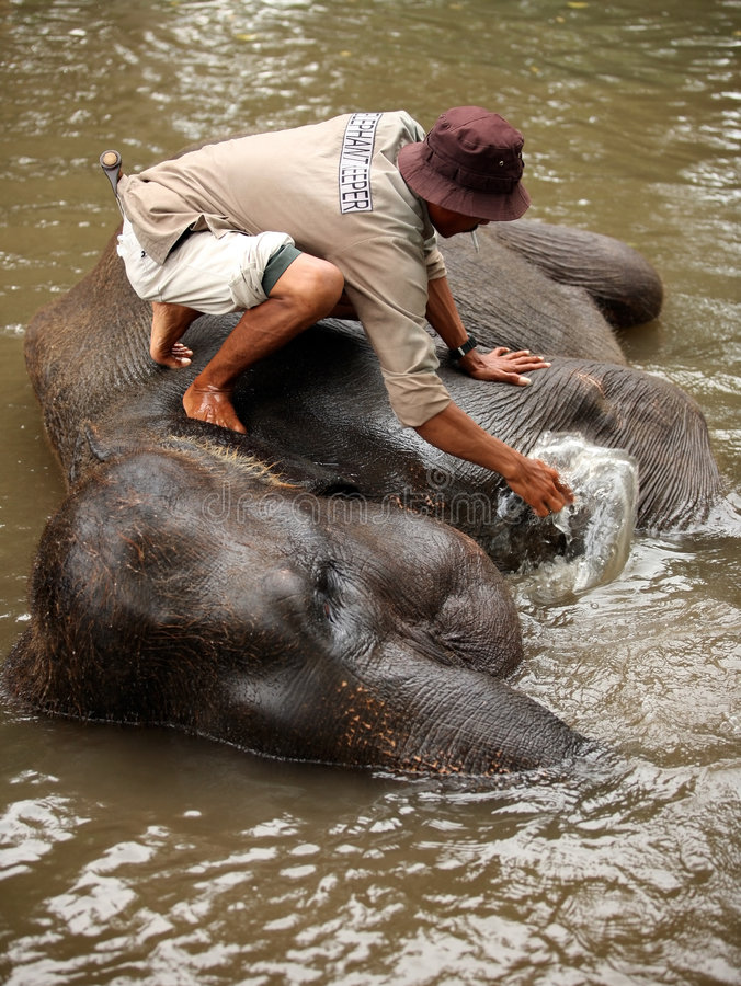 Custode dell'elefante fotografia stock