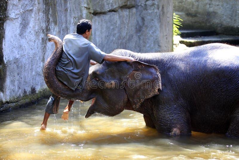 Custode dell'elefante fotografie stock