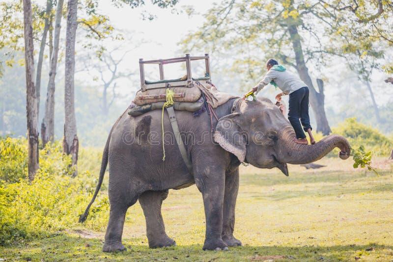 Custode dell'elefante - Mahout nel parco nazionale di Chitwan, Nepal fotografia stock