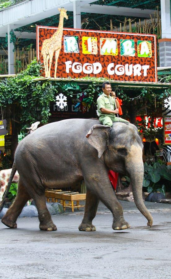 Custode di zoo dell'elefante fotografia stock libera da diritti