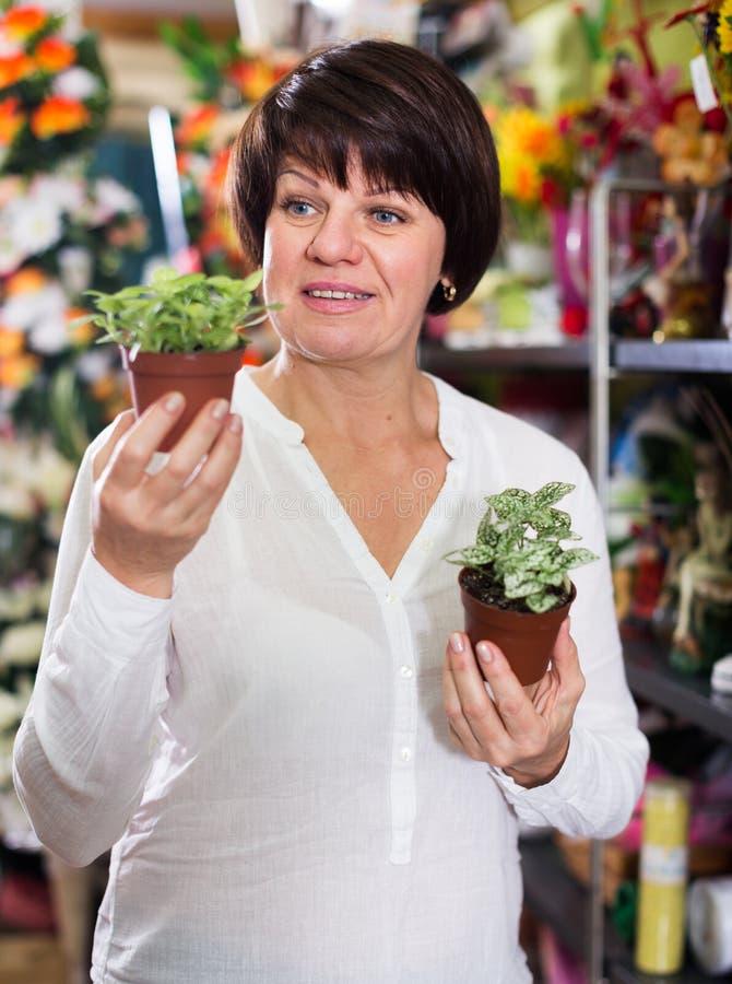 Download Customer choosing begonia stock image. Image of buying - 83701675