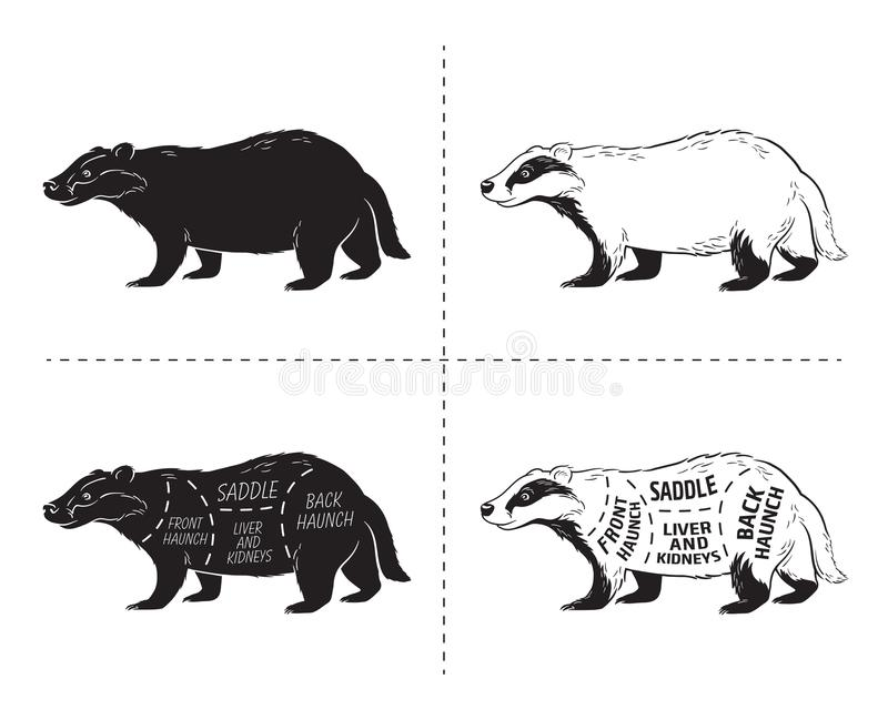 Cut of badger set. Poster Butcher diagram - desert-ship. Vintage typographic hand-drawn. stock illustration