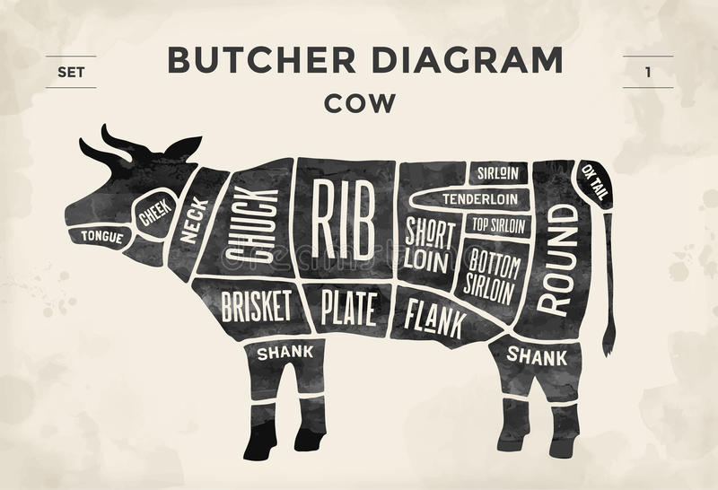 cut beef set poster butcher diagram cow vintage typographic hand drawn vector illustration 65442455 cut of beef set poster butcher diagram cow vintage typographic
