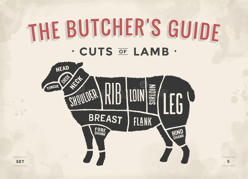 Cut of beef set. Poster Butcher diagram and scheme - Lamb. Vintage typographic hand-drawn. Vector illustration. Cut of beef set. Poster Butcher diagram and stock illustration