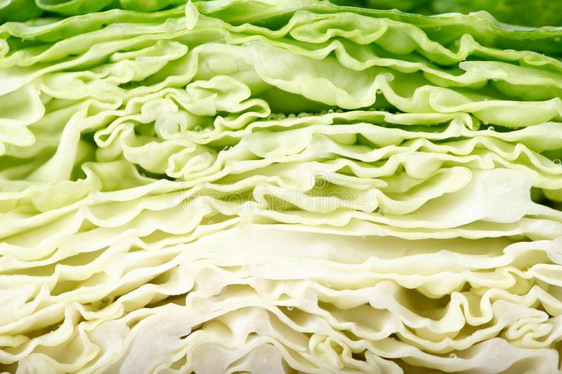 Cut cabbage close up. Clearly visible texture of cabbage leaves. as a background. space for text stock images