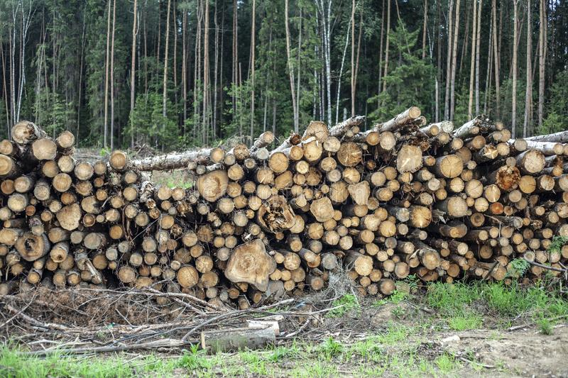 Cut down forest. Harvesting logs. stock photography