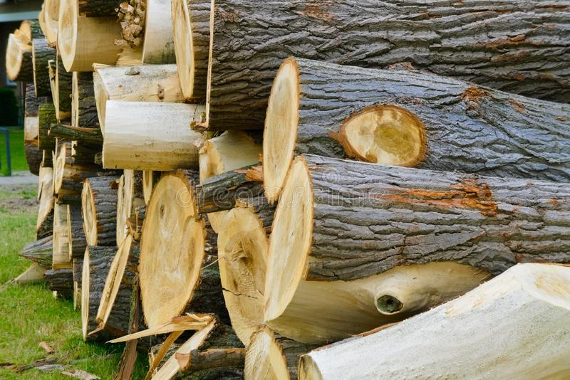 Cut down lumber stacked on each other royalty free stock photo
