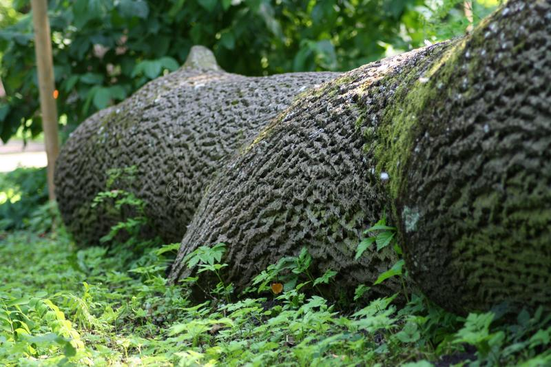 Cut down tree covered with invasive moss. stock images