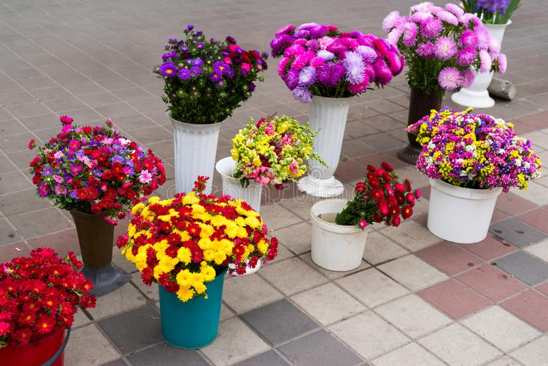 Cut flowers and buckets for sale royalty free stock photography