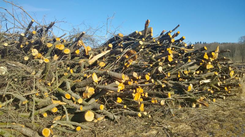 Cut fruit tree branches trimmed, South Bohemia. Czech Republic stock photography