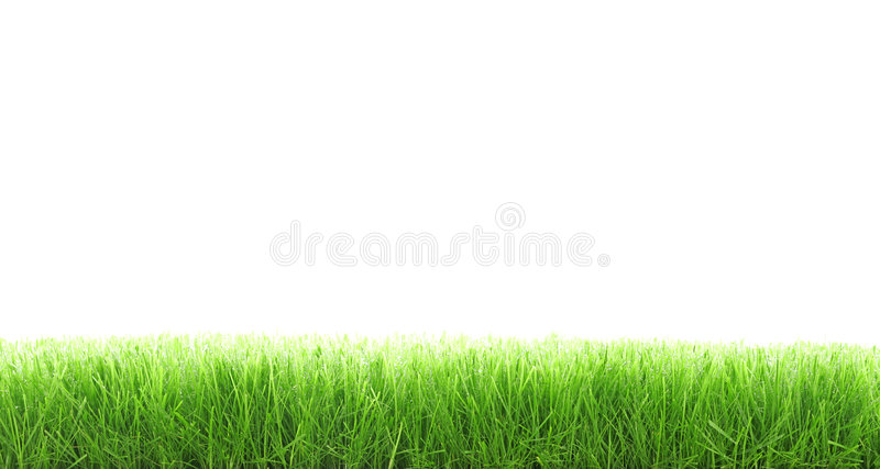Cut grass royalty free stock image
