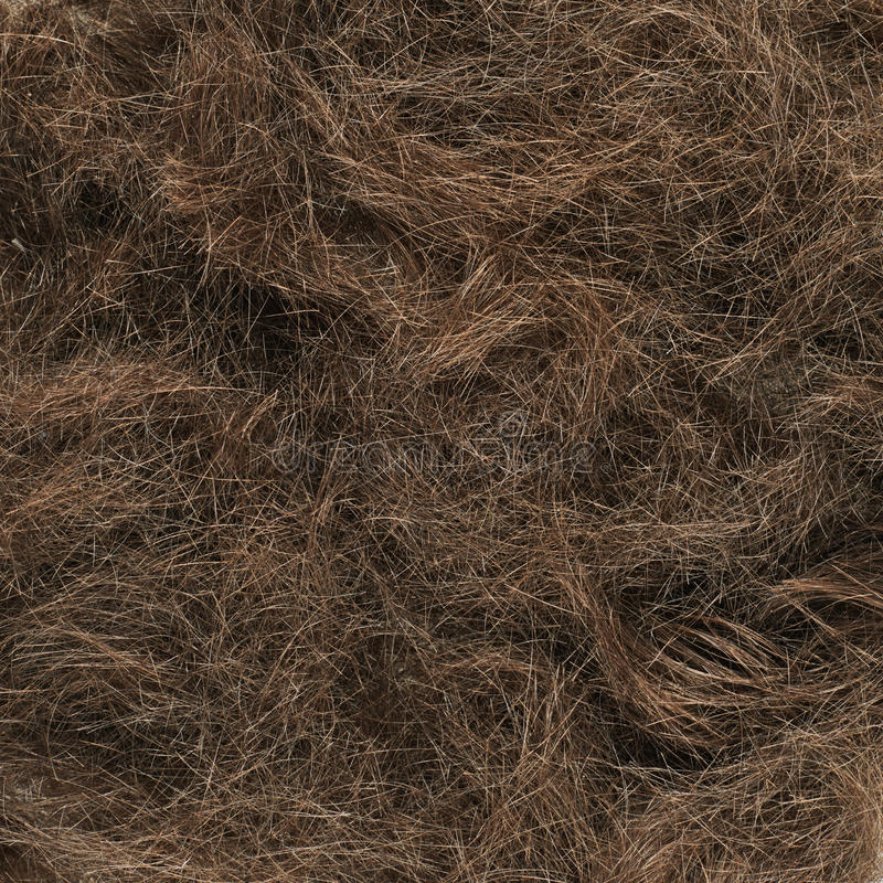 Cut hairs fragment stock image