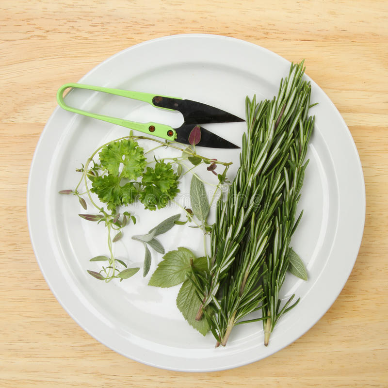 Cut herbs on a plate. A plate with freshly cut herbs with miniature shears on a wooden board royalty free stock photos