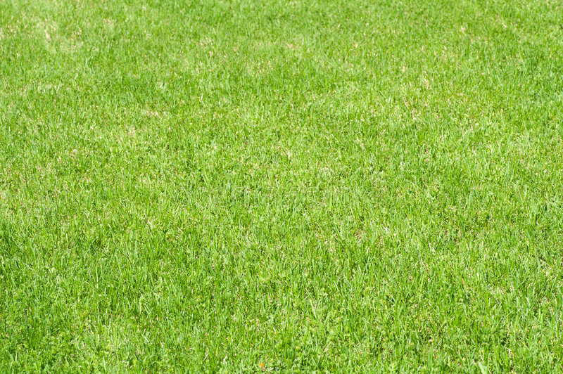 Cut Lawn Stock Photography