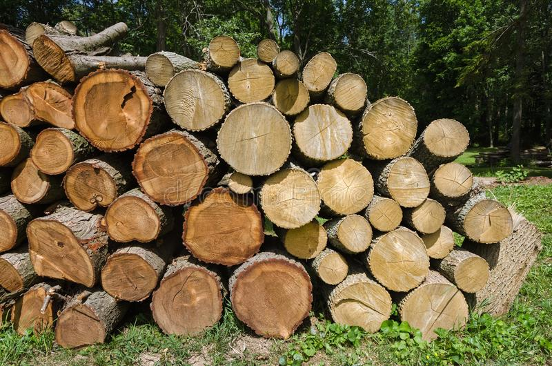 Cut Log Woodpile. Large Amount of Cut Firewood in Stack stock photo