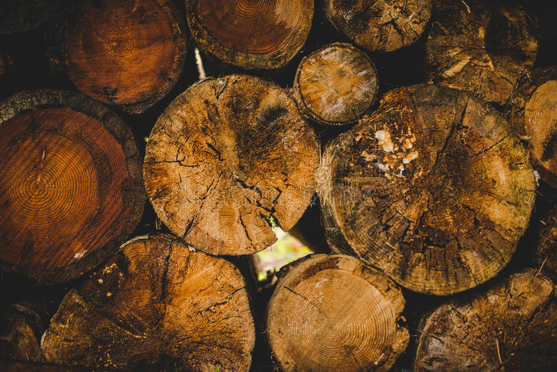 Cut logs into the fir forest in a rainy day Alps Italy stock photos