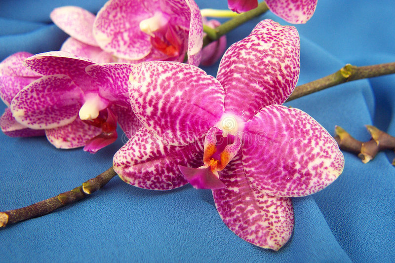 Download Cut for Market stock photo. Image of flower, love, orchid - 216686
