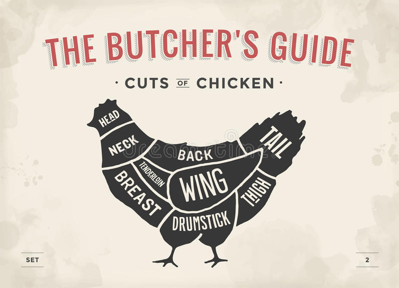 Cut of meat set. Poster Butcher diagram and scheme - Chicken. Vintage typographic hand-drawn. Vector illustration. Cut of meat set. Poster Butcher diagram and stock illustration