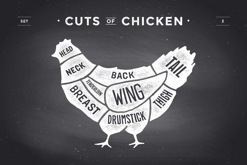 Cut of meat set. Poster Butcher diagram and scheme - Chicken. Vintage typographic hand-drawn. Vector illustration. Cut of meat set. Poster Butcher diagram and vector illustration