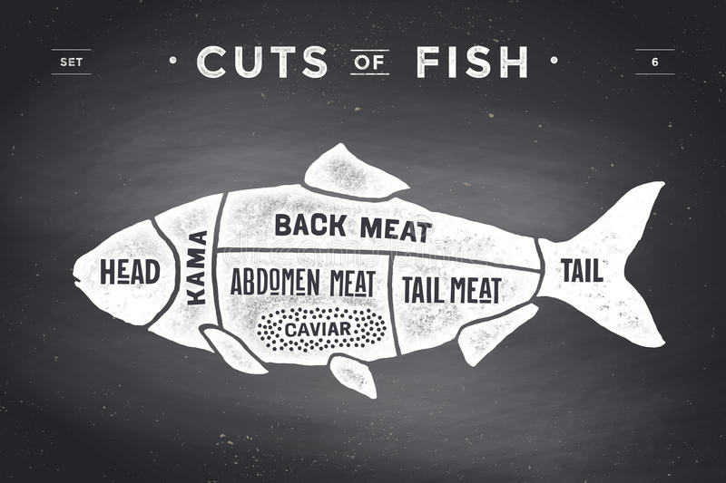 Cut of meat set. Poster Butcher diagram and scheme - Fish. Vintage typographic hand-drawn on a black chalkboard background. Vector illustration vector illustration