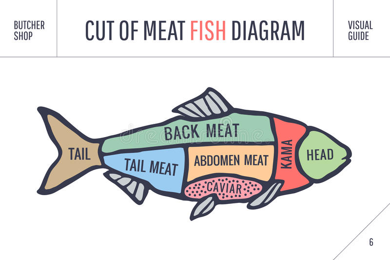 Cut of meat set. Poster Butcher diagram and scheme - Fish. Vintage typographic hand-drawn. Cut of meat set. Poster Butcher diagram and scheme - Fish. Colorful royalty free illustration