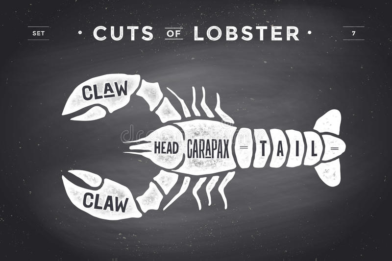 Cut of meat set. Poster Butcher diagram and scheme - Lobster. Vintage typographic hand-drawn visual guide for butcher shop on chalk black background. Vector royalty free illustration