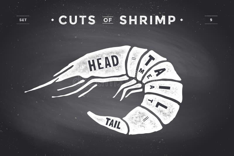 Cut of meat set. Poster Butcher diagram and scheme - Shrimp. Vintage typographic hand-drawn visual guide for butcher shop on chalk black background. Vector royalty free illustration